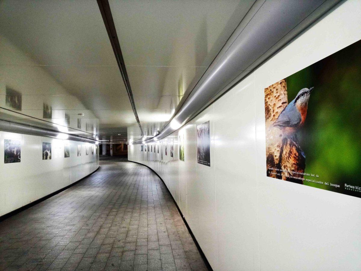 Prórroga exposición fotográfica «30 años con cajas-nido»