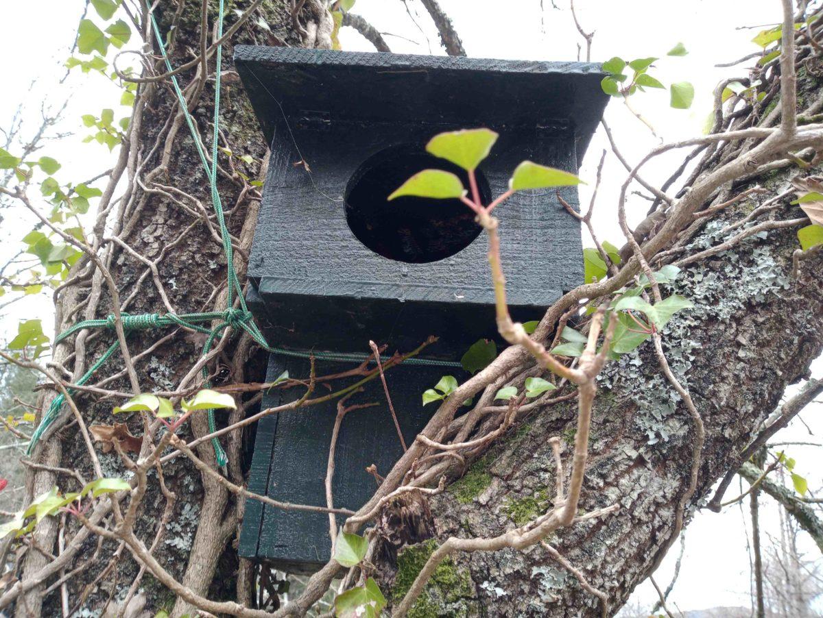 Ya hemos preparado la caja-nido para el cárabo en Aiako Harria
