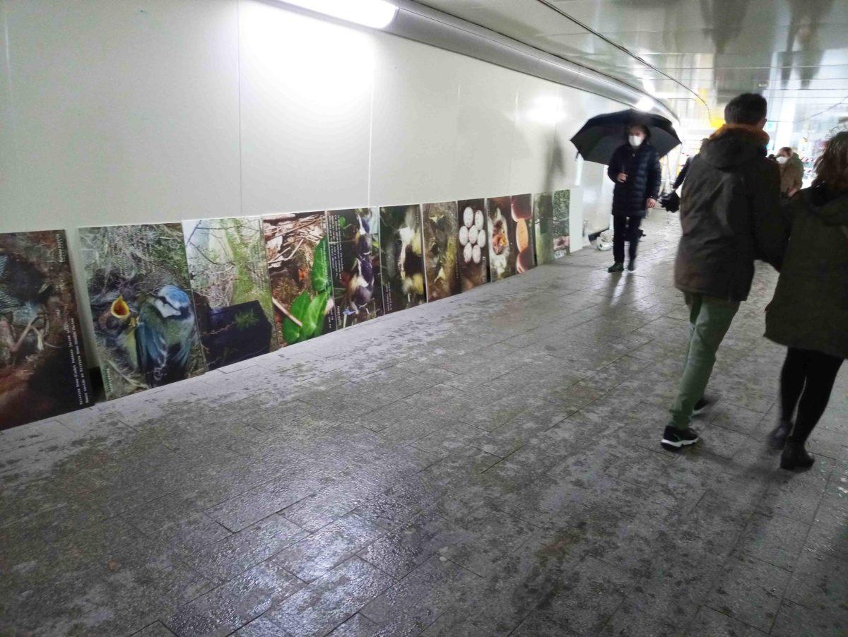 Concluye la exposición fotográfica «30 años con cajas-nido» en el subterráneo de Egia